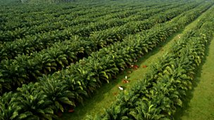 Image for Palm Oil