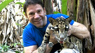 Steve Backshall watching a clouded leopard climbing a tree