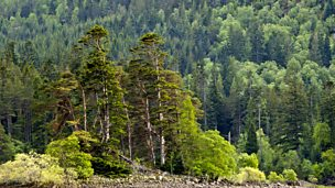 Image for Scotland - Glen Affric