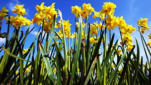 Image for The Flower Fields
