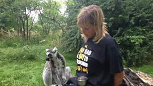 Image for Mel meets Julius the lemur