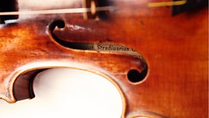Image for The Stradivarius Tree
