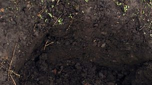 Image for MacAulay and Co. Gardening Tips - Soil PH and buying gardening knives