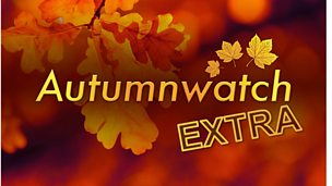 Image for Autumnwatch Extra highlights