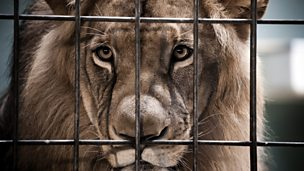 Image for Zoos: Vital in conservation or animal prisons?