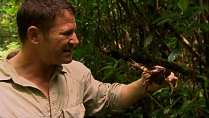 Steve Backshall from Deadly Pole to Pole with a jungle crab.