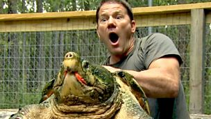 Steve looking surprised holding a snapping turtle.