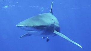 Radio 4: Sharks