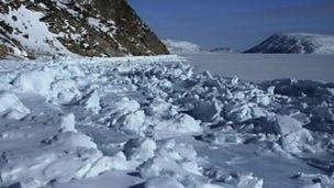 Mussel gathering under sea ice