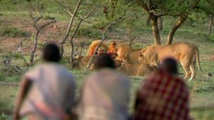 Three men and 15 lions