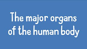 An introduction to the major organs of the human body