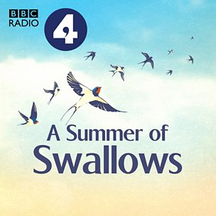 A Summer of Swallows