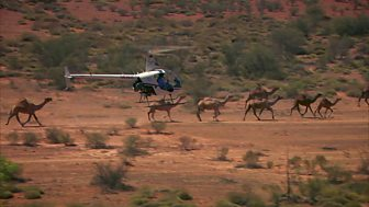 Australia with Simon Reeve - Preview: Camel carnage