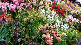 RHS Chelsea Flower Show, 2013 - Episode 3