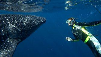 Natural World - 2008-2009: 2. Whale Shark