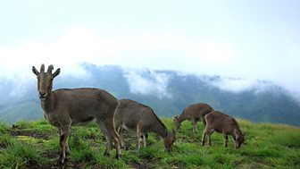 Natural World - 2008-2009: 8. The Mountains Of The Monsoon