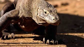 Natural World - 2011-2012: 4. Komodo - Secrets Of The Dragon