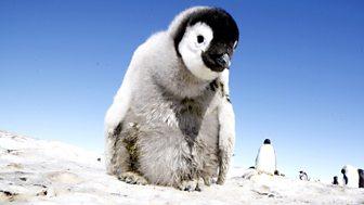 Penguins - Spy in the Huddle