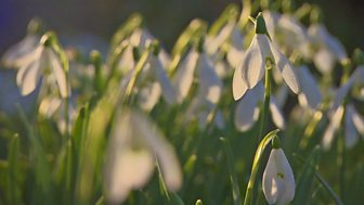 Gardeners' World - 2015: Episode 1