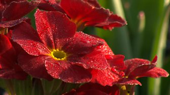 Gardeners' World - 2015: Episode 4
