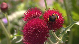 Gardeners' World - 2015: Episode 10