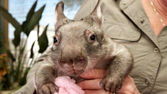 Natural World - 2016-2017: 5. Kangaroo Dundee And Other Animals Pt 2