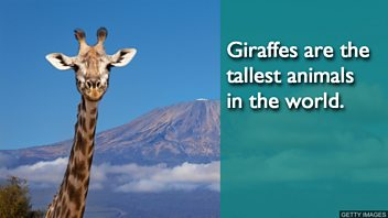 THE_giraffe_GettyImages-687030934.jpg