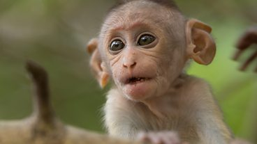 In pictures: A Monkey's Tale