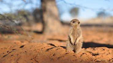 In pictures: A Meerkat's Tale