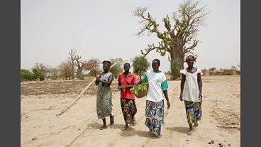 Tree Aid's Work in Burkina Faso