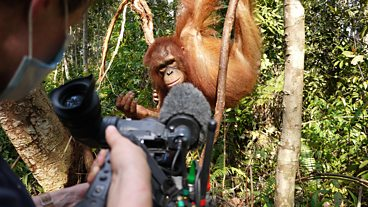 Great Ape Escape: Behind the Scenes