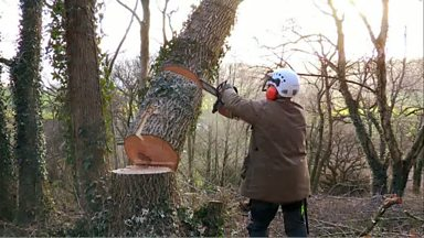 Image for Felling a tree