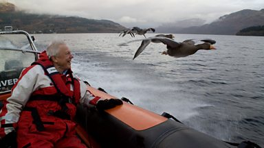 Image for Attenborough's goose chase
