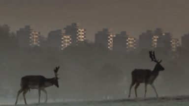 Image for Surprising urban wildlife
