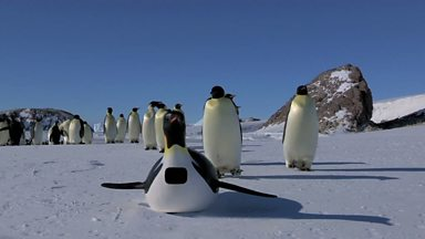 Image for First encounter with PenguinCam