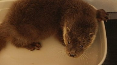 Image for Baby otter rescue