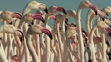 Image for Flamingos in Dubai