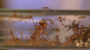 Image for Why are ants different sizes?