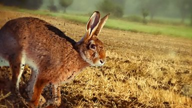 Image for Saving the brown hare