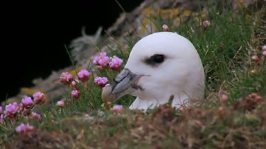 Image for Birdwatching on Fair Isle