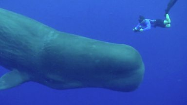 Image for The playful and giant sperm whale
