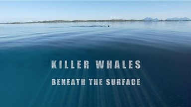 Image for Killer Whales: Beneath the Surface