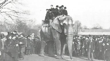 Image for Jumbo the elephant