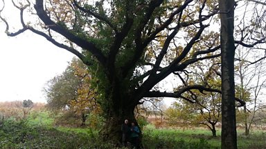 Image for Fungus found for the first time in Ireland beside the oldest oak tree in Northern Ireland