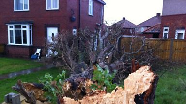 Image for Falling tree narrowly misses Stockton home.