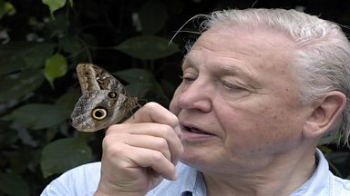 Image for Sir David Attenborough meets Steve Le Fevre