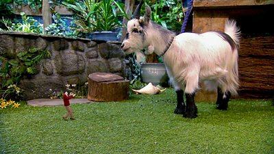 Mr Scoffbucket the Goat