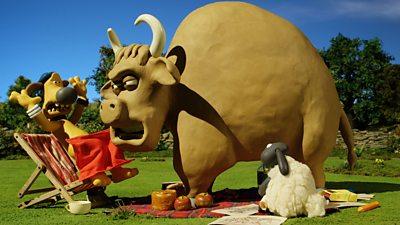 Bull vs Wool