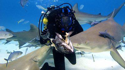 Shark Special