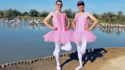 Flamingos, Elves and World Records